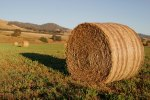 Round_hay_bale_at_dawn02